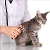 Ветеринарные клиники в Ковдоре